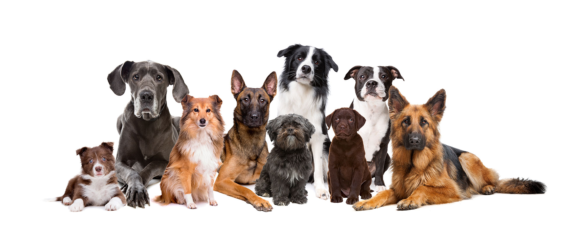 About Us - RCO Pet Care
