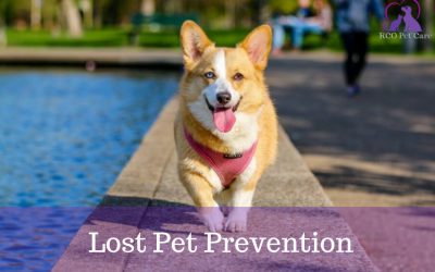 Reunited and It Feels So Good: Lost Pet Prevention