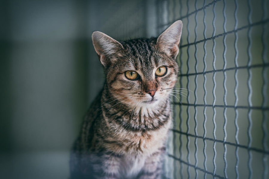 Lost Pet Prevention and Recovery in Connecticut