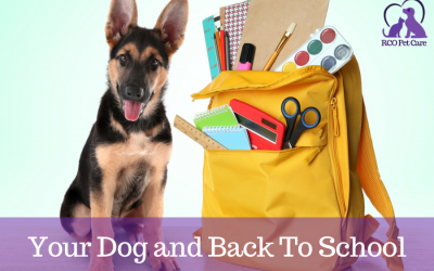 Your Dog and the Back to School Transition