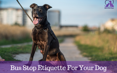 Bus Stop Etiquette for Your Dog
