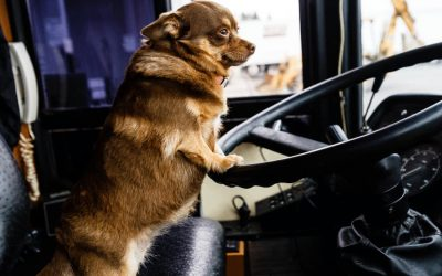 Bus Stop Etiquette for Your Dog | Back to School Tips