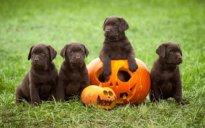 Halloween Pet Safety Tips: Celebrate Safely