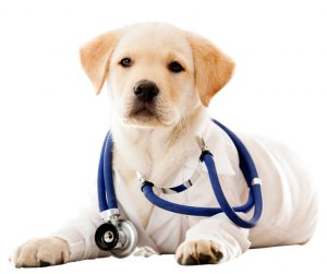 emergency vets in Connecticut dog