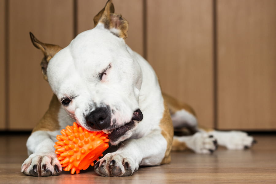 Indoor Games for Your Dog This Winter