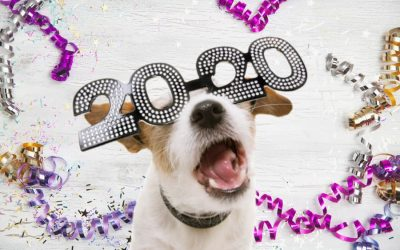 New Year's Resolutions to Make For Your Pet
