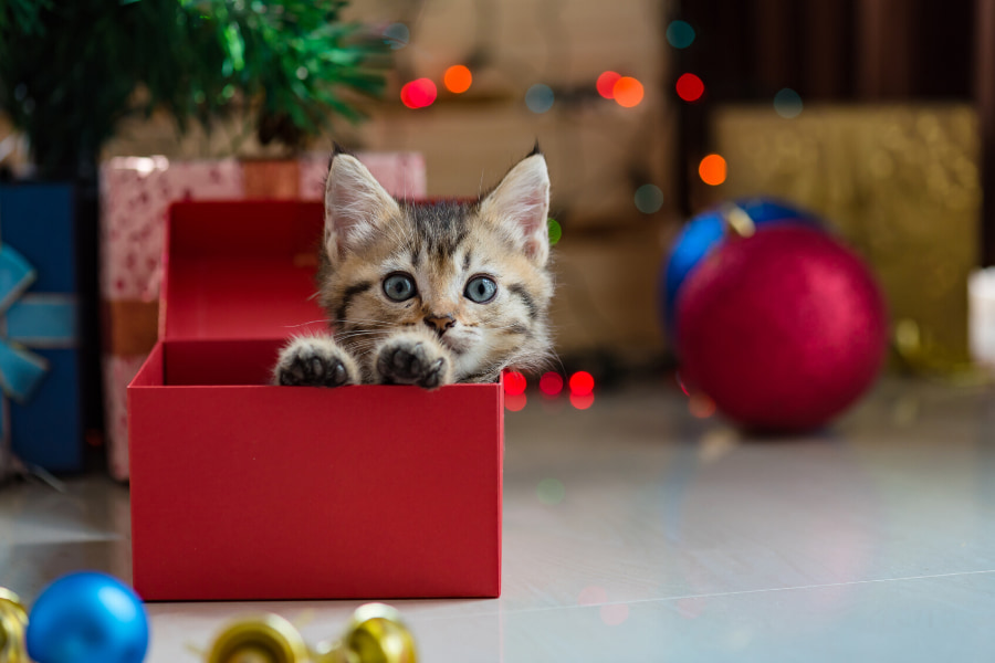 5 Reasons to Avoid Giving a Pet as a Gift This Christmas
