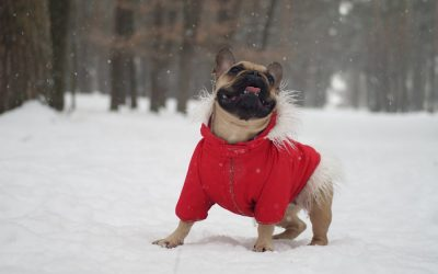 Connecticut Winter Dog Walking Tips