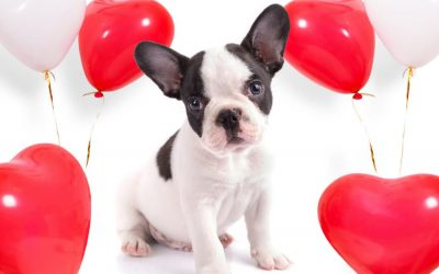 6 Ways to Spend a Pet-Friendly Valentine's Day in Connecticut