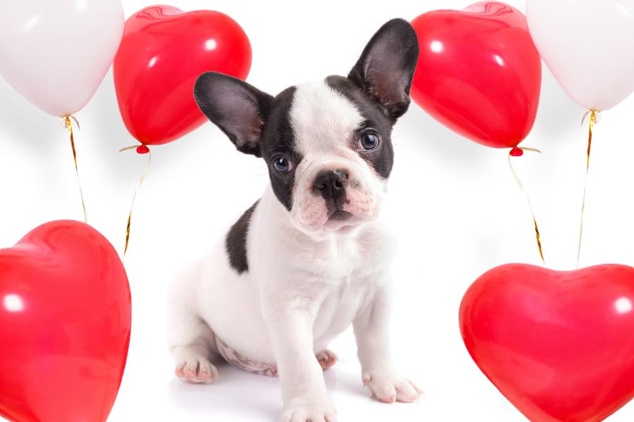 6 Ways to Spend Valentine's Day with Your Pet