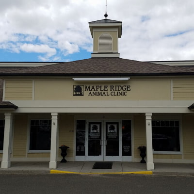 Maple Ridge Animal Clinic