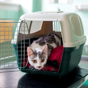 Middlebury Animal Hospital