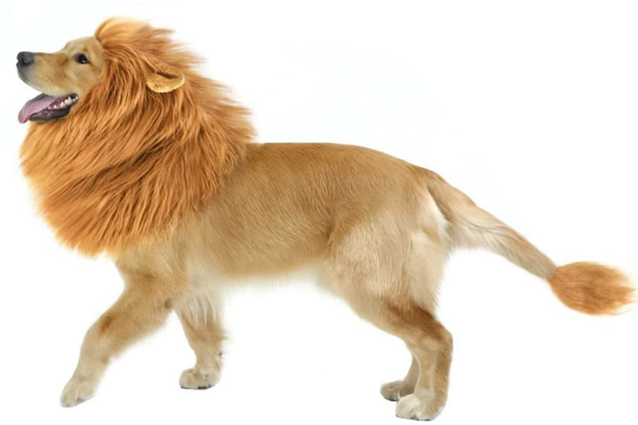 RCO Pet Care Halloween Costumes For Your Pet Dog in Lion Costume