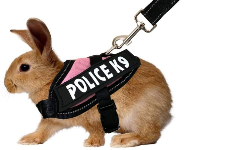 RCO Pet Care Halloween Costumes For Your Pet Small Animals Rabbit Wearing Vest
