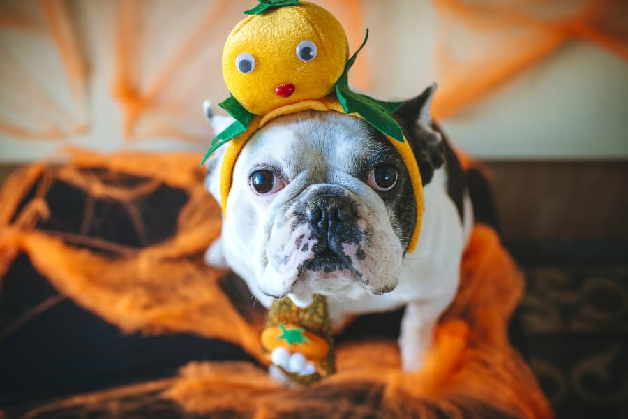 Top 5 Last Minute Halloween Costumes for Your Pet