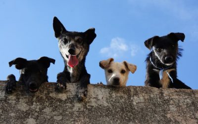 What to Consider When Choosing Pet Insurance