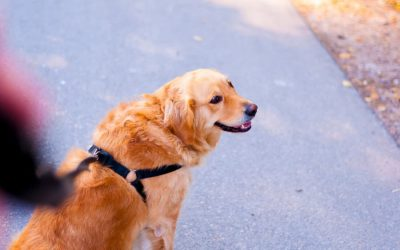 Hiring a Dog Walker in Connecticut: 7 Things to Consider
