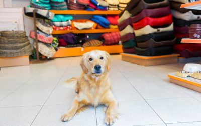 Where to Shop Locally for Pet Gifts in Greater Waterbury