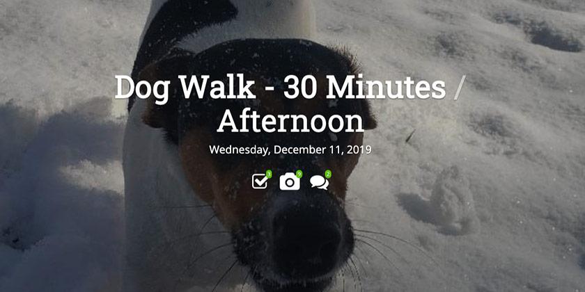 Dog Walk - 30 Minutes / Afternoon