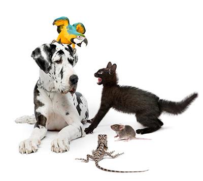 RCO Pet Care Pet Sitting