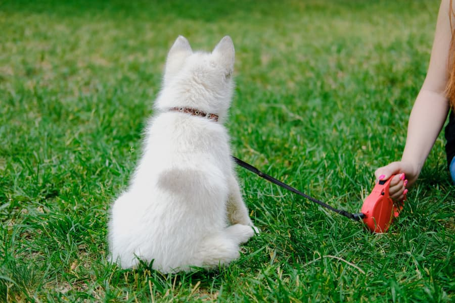 Why to Ditch Your Retractable Dog Leash