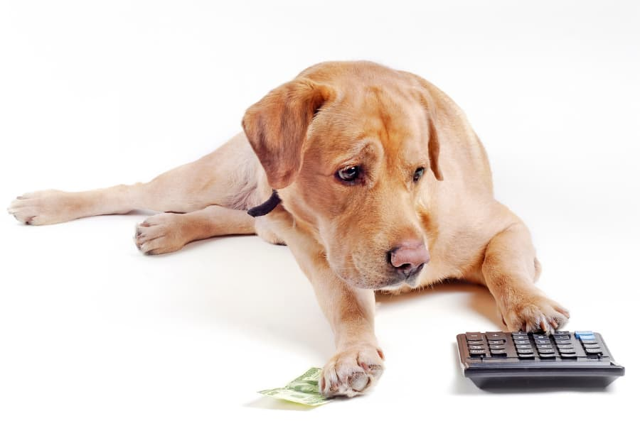 Yellow dog with cash and calculator