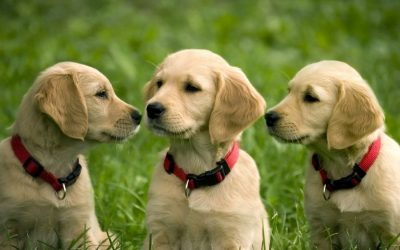 The Importance of Spaying and Neutering Your Pet in Connecticut