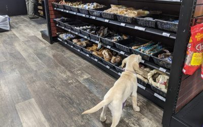 Meet Choice Pet – Southbury's Newest Pet Store