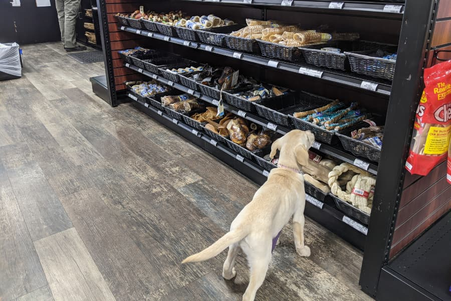 Meet Choice Pet – Southbury's Newest Pet Store