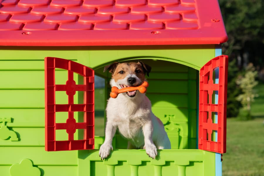 Pet Sitting vs Boarding Cost in Connecticut