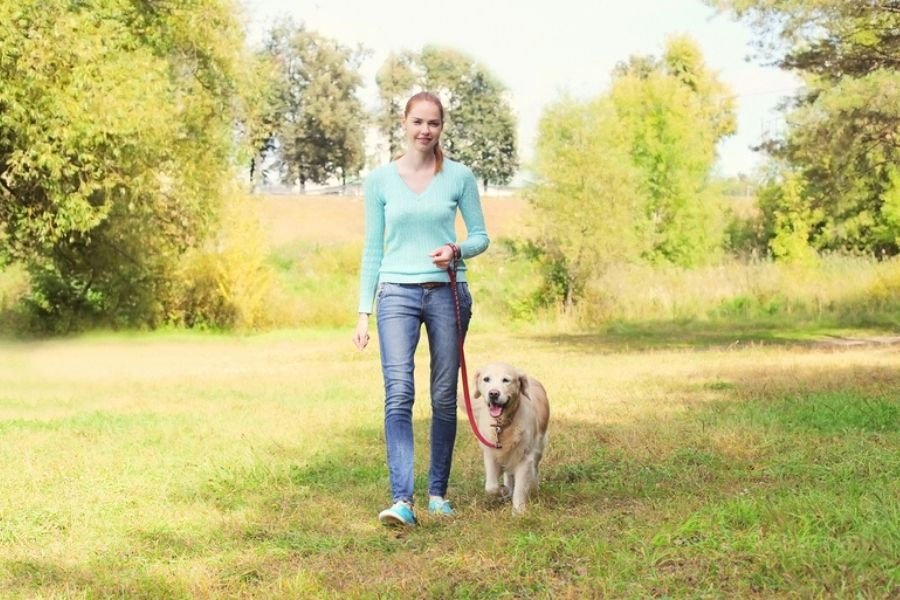 Cost of Dog Walking In Connecticut