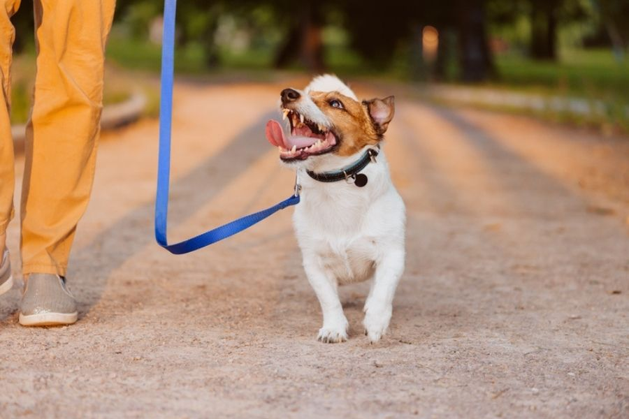 The Cost of Dog Walking In Connecticut