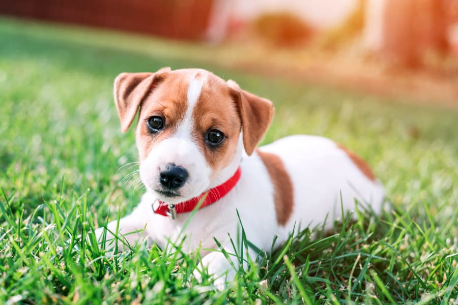 Tips to Welcome a New Puppy to Your Family