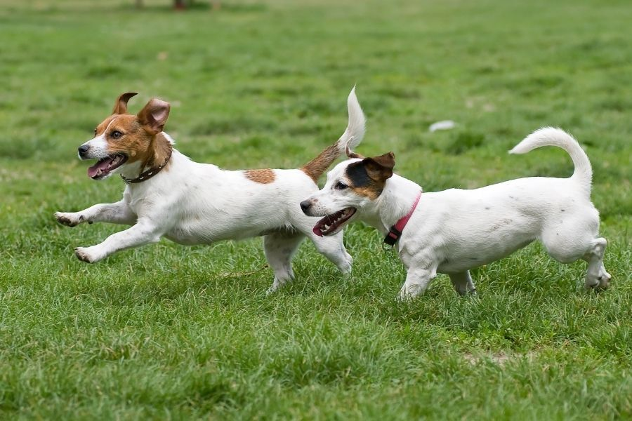 Choosing a dog daycare in Connecticut
