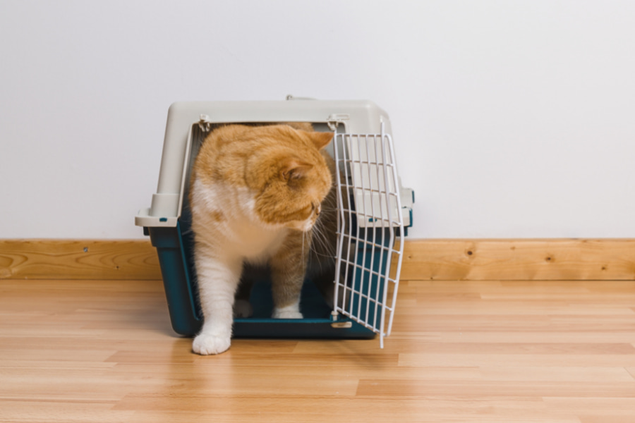 The Dreaded Cat Carrier: Can Your Cat Enjoy It?!